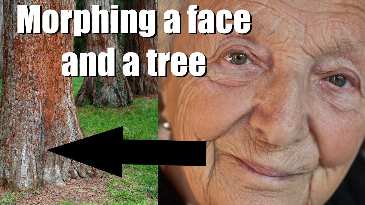 Photoshop elements morphing a face with a tree photoshop elements photoshop elements morphing a face with a tree photoshop elements tutorial baditri Gallery