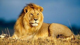 Мир Африки. Животные саванны