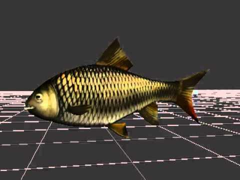 Fish animations: Анимация Рыбы
