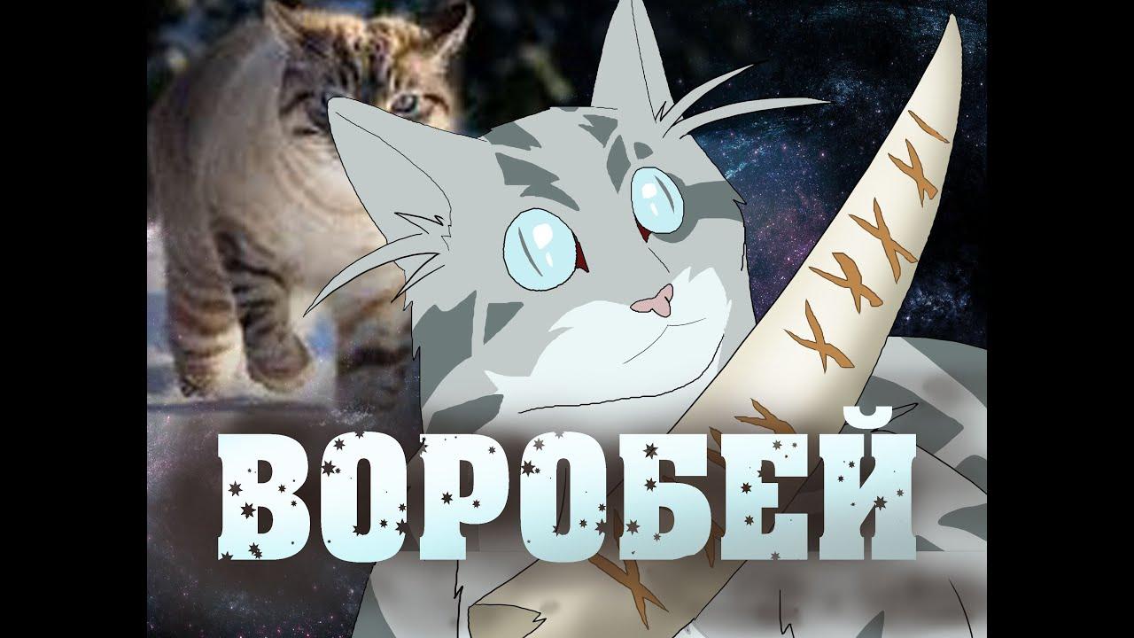коты воители картинки воробей