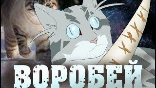 Арт Коты воители  Воробей