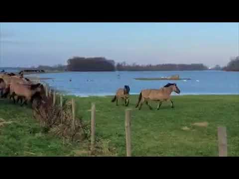 Hoogwater in Munnikenland