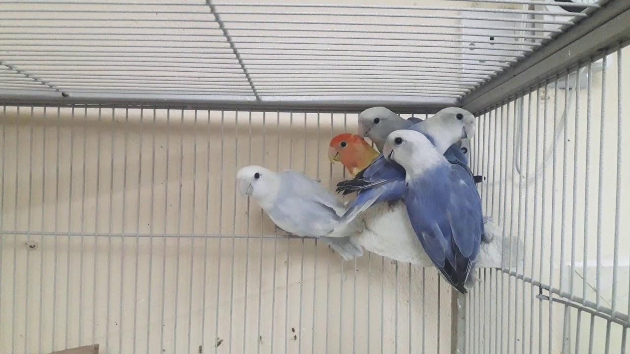 So Smart  Love Birds ❤ must watch