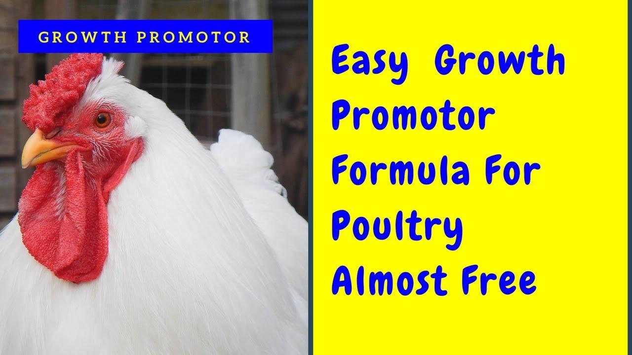 सिरके और नीले थोथे से ग्रोथ बढ़ायें और बीमारियां कम करें ! Copper Sulphate  and Vineger In Poultry