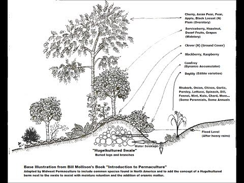Polycultures and Guilds: Zone 8 Food Forest Examples.