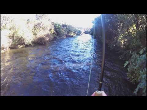 Fly Fishing The Hinemaiaia River Trophy Trout In This River