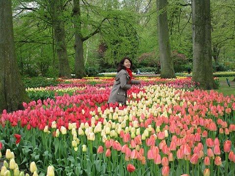 Keukenhof Gardens Tulip Fields In Netherlands The Garden Of