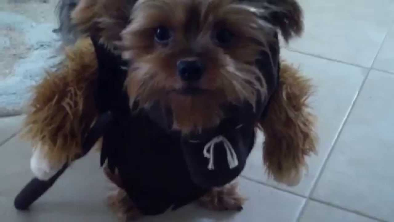 Dog Ewok costume part 2 & Dog Ewok costume part 2 - YouTube