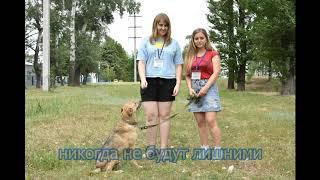 А что вы знаете о Харьковском муниципальном приюте для бездомных животных?
