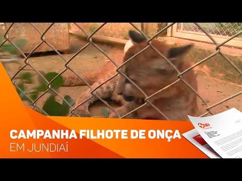 Campanha para ajudar filhote de onça em Jundiaí - TV SOROCABA/SBT