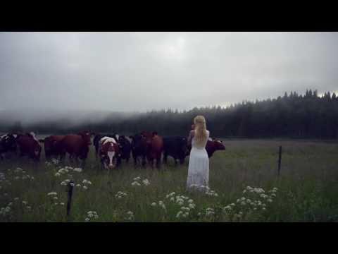 Il canto di questa ragazza fa impazzire le mucche!!!
