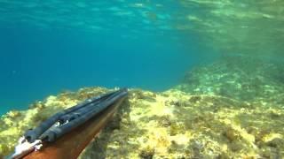 Spearfishing - Zıpkınla Balık Avı - Barakuda 5 Kg - Kaan Timoçin