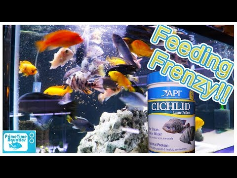 API Fish Food Review: Want To See A Feeding Frenzy?