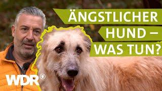 Hilfe bei ängstlichem Hund | Hunde verstehen (3) | Tierratgeber | WDR