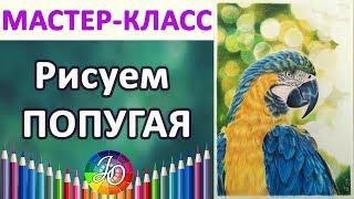 МАСТЕР-КЛАСС. Как нарисовать попугая пошагово (сине-жёлтый ара)