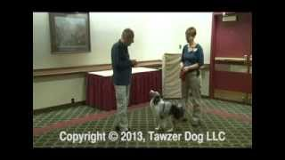 The 20 Principles All Animal Trainers Must Know - Roger Abrantes