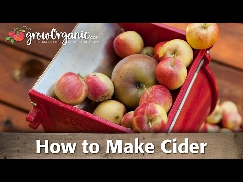 How to Make Your Own Organic Cider