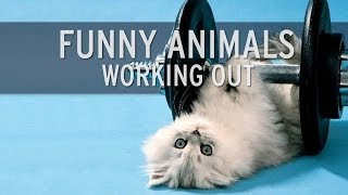 XHIT - Funny Animals Working Out