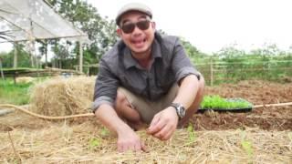 เกษตรไทยไอดอล l EP.81 ตอน ครอบครัวสวนผักอินทรีย์ 26 ธ.ค.59