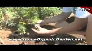 Design Build Plant Organic Garden - Companion Planting