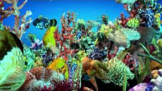 Iclone aquarium