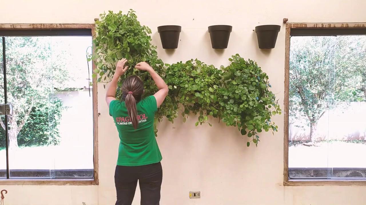 Download Dicas para Decoração: Dê vida para sua parede esquecida - parte 2 | Spagnhol Plantas