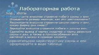 Голосеменные.avi