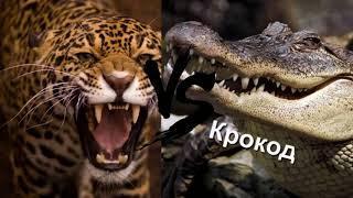 Топ жестокие схватки зверей  Смертельные битвы диких животных  Смертельные бои животных      1