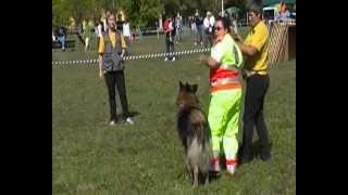 I primi passi di un cucciolo nella ricerca su macerie- Mai dire Bau