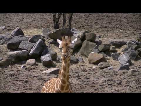 Dierenpark Emmen - Thans Wildlands Adventure Zoo