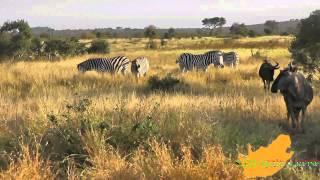 Zuid-Afrika: Binnen 24 uur de Big 5 in het Krugerpark - van Berg en Dal naar Skukuza
