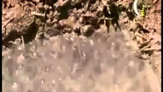 النهي عن قتل الضفدع وشاهد التضحية الزيارات: 497 التقييم 0 التاريخ: 10/3/2015