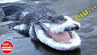 Điều Gì Sẽ Xảy Ra Khi Cá Sấu Bị Đóng Băng? |  Top 10 Huyền Bí