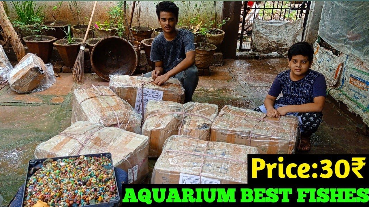 Unboxing fish || unboxing fish in india ||  Aquarium fish stock || indian Aquarium fish market