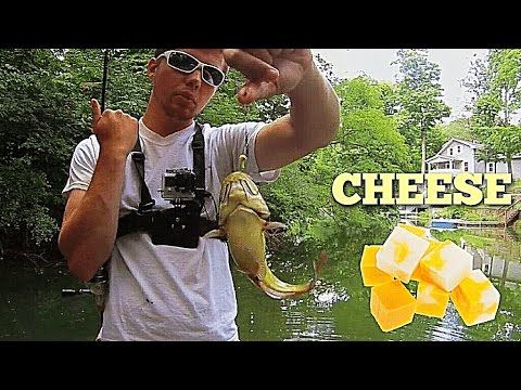 Bullhead Catfish Love Cheese Balls