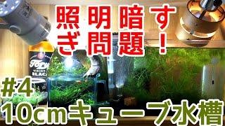 【ボトルアクアリウム】照明追加!グロッソスティグマ光量不足解消か!?【グロッソ水草水槽10cmキューブ~緑の絨毯目指して~#4】 thumbnail
