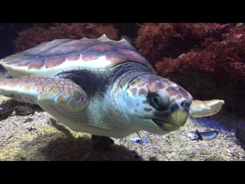 Ozean Museum Monaco
