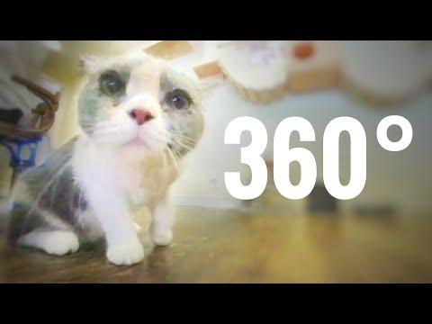Best Cats 360 VR video Super Cute Cat Coffee Shop China VR Box