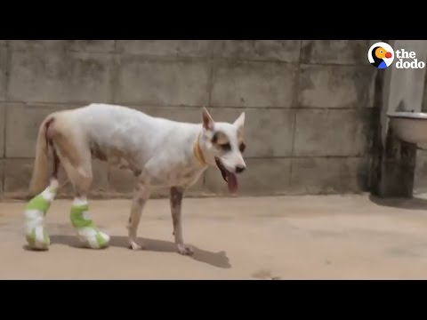 Dog Who Broke Her Legs Gets The Help She Needs To Recover | The Dodo