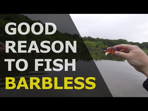 A Good Reason To Use Barbless Trebles And Hooks!
