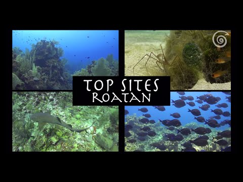 """Top Sites Roatan"" -- Macro Life"