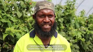 PLS/SWP workers at Queensland Berries