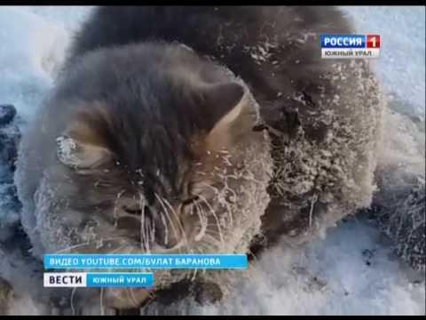 Спасти кота youtube