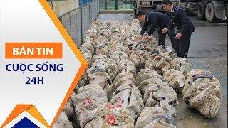 50 tấn vỏ sò tai tượng Trường Sa bị 'chôm' | VTC1