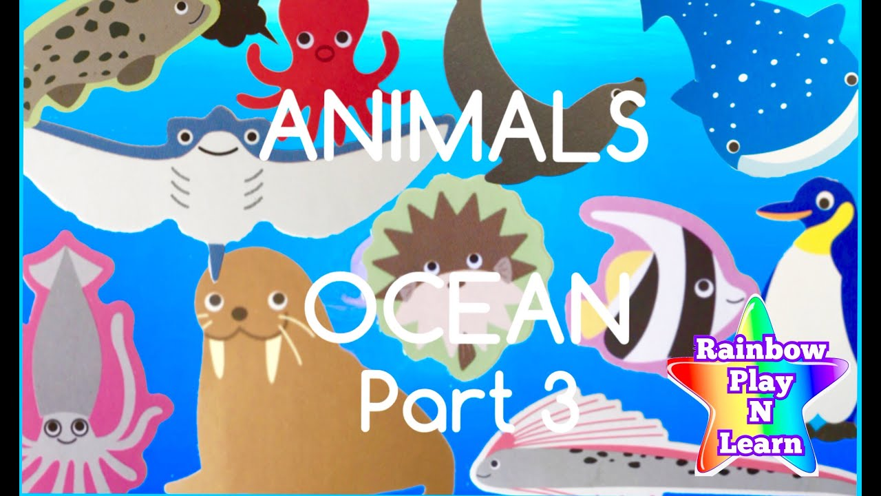 Real ocean animals pictures