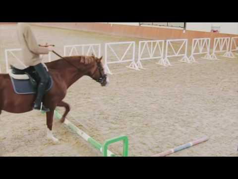 знакомства верховая езда