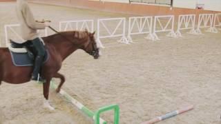 Спорт для чайников: верховая езда