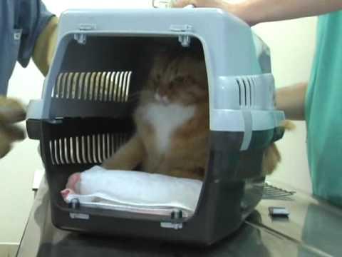 Psycho Cat Susam