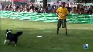 """Dog dance e agility: cani protagonisti con """"4 zampe in azione"""""""