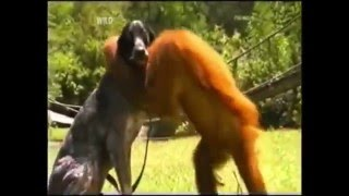 Precious Interspecies Animal Friendship Short